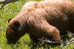 Bear Crane Flat by Jeffrey Trust