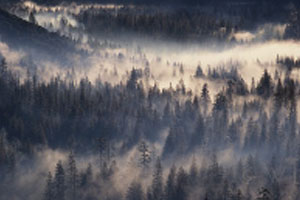 Valley Fog by William Neill