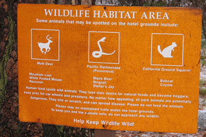 wildlife sign Mark Ayzenshtat