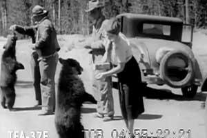 Yosemite 1940s